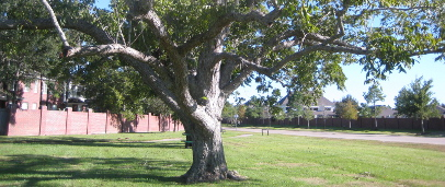 Forest of Friendswood HOA